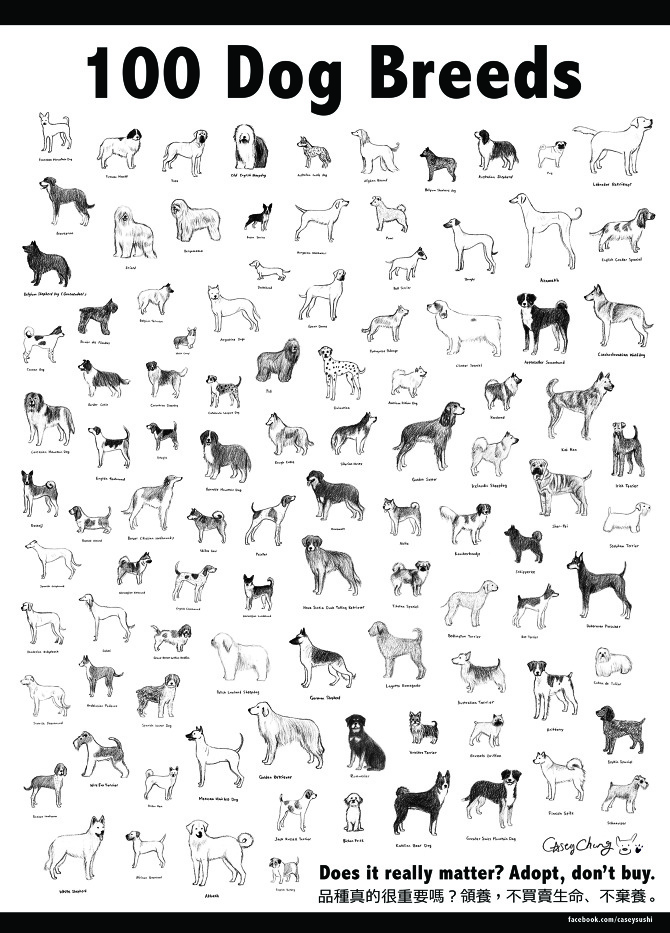 Furry Dogs Breed Names